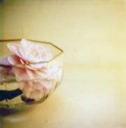 Camellia_bowl_3